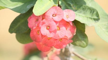 healthfulness: round red flower