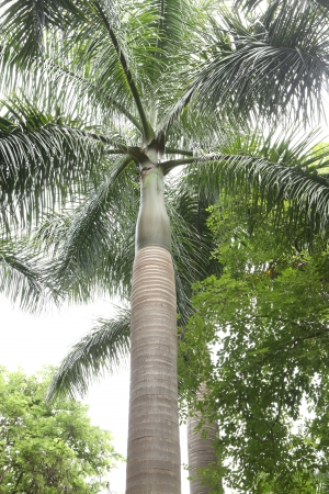 withhold: palm tree lower angle