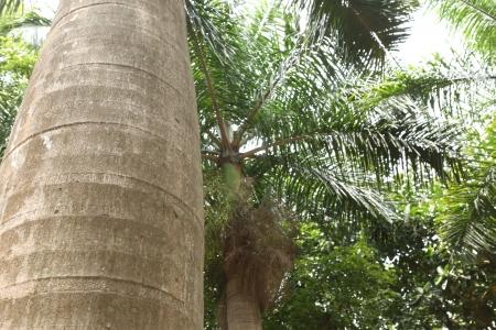 palm tree trunk Stock Photo