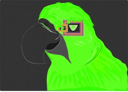 trail running: parrot Illustration