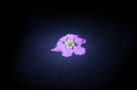 lurid: light on a pink flower Stock Photo