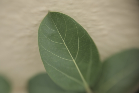 leaf in lensbaby