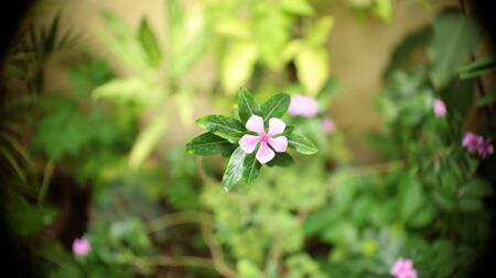 irradiation: small pink flower