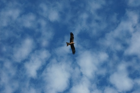 breadth: eagle in the sky