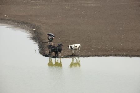 animals and water Stock Photo