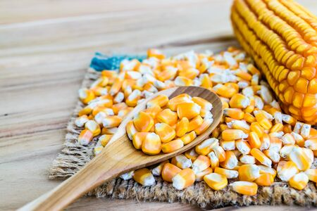 corn seed or maize corn seed pile in spoon wooden on brown sack on table wooden Stock Photo
