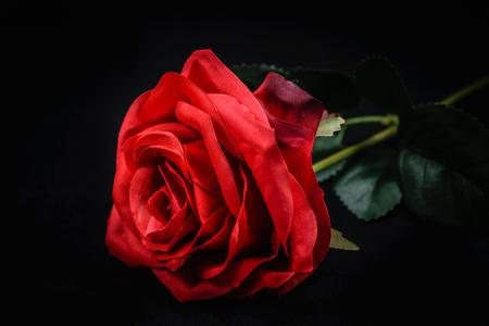 Piękna czerwona róża zbliżenie zdjęcie czarne tło
