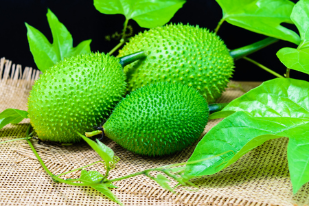 spiny: Gac fruit, Baby Jackfruit, Spiny Bitter Gourd, Sweet Grourd or Cochinchin Gourd Stock Photo