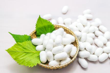 Silk cocoon in the basket on white background Standard-Bild