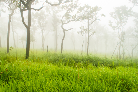 Fog cover the mountain forest in Thailand