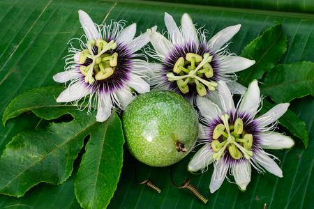 passion fruit flower on the banana leaf