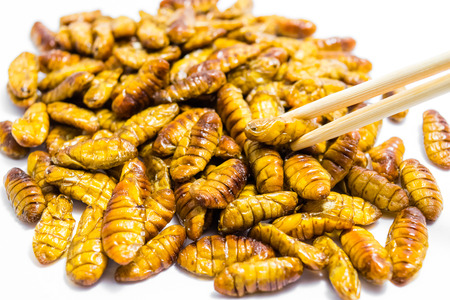 Fried silkworm's pupa with chopsticksr on the white background
