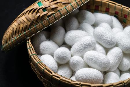 Silk cocoon in the basket on dark background