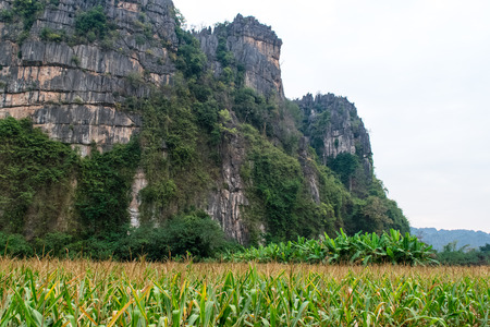 Corn field with a Limestone hill in the back