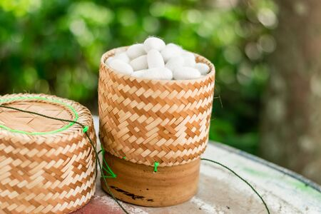 White silk cocoon in Kratib glutinous rice on nature background Stock fotó