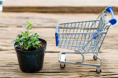 Serissa japonica plant in a black pot with Mini Shopping Cart on an old wooden floor