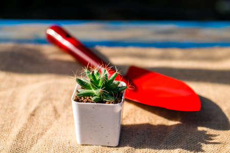 Small cactus with Garden tools shovel red on a wooden table