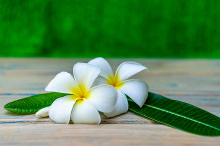 Beautiful plumeria flowers on an old wooden table in the garden