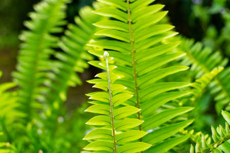 Beautyful ferns leaves green foliage natural floral fern background