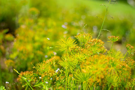 The grass blooming in the forest Stockfoto