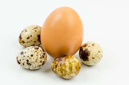 quail egg: Egg and quail egg