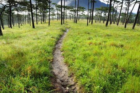 Pine forest at Phusoidao mountain in Thailand Stock Photo