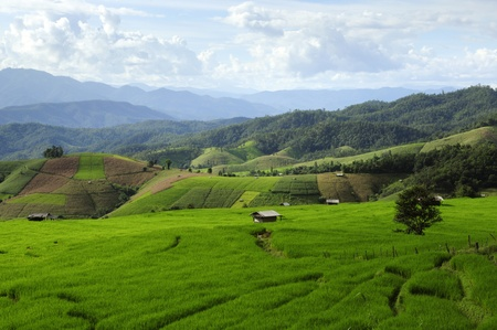 terraced field: Rice Fields at Maechaem in Thailand