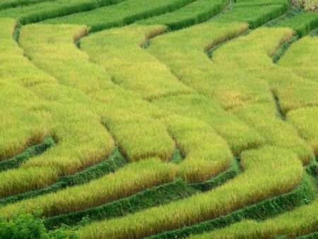 Rice Terrances at Maechaem in Thailand Stock Photo