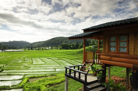 Rice Fields and Accommodation for tourists  photo