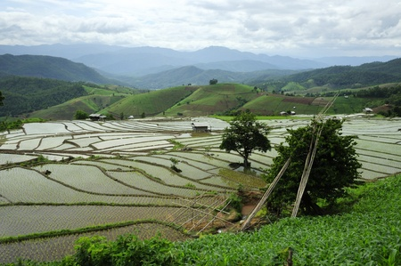 Rice Terrace at Maechaem in Thailand