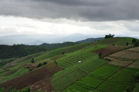 Corn fields with small hut