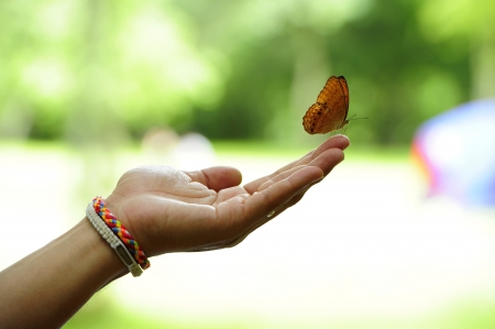 Yellow butterfly on human hand.