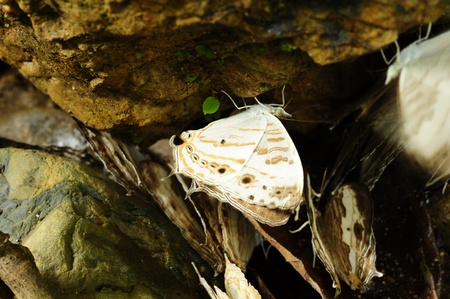 White butterfly on a stone floor. Stock Photo