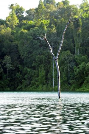 tree dead: Albero morto nel fiume.