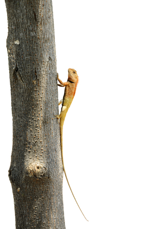 changing form: Lizard perched on a tree