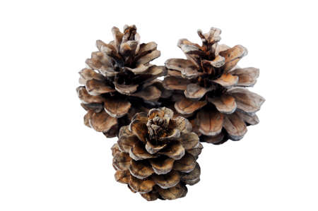 Pine cones on white background  Stock Photo