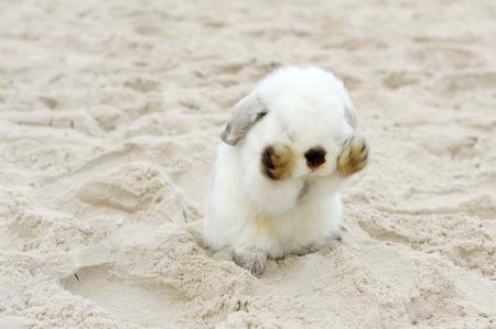 White Rabbit on the Beach