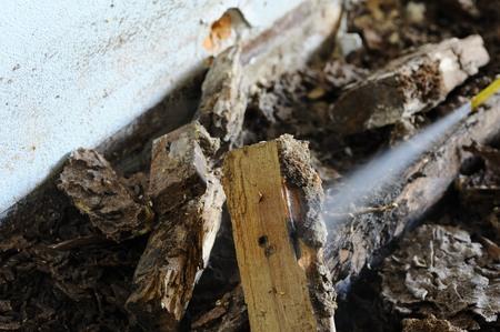 subterranean: Injection termite control ate wood floor.