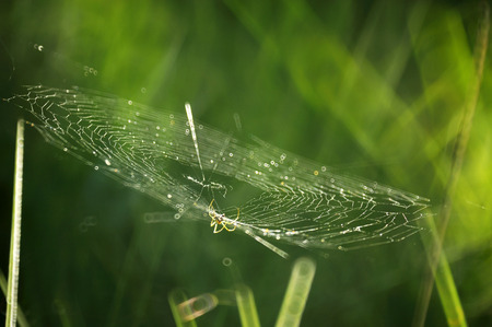 Spider on web spider with dew. Stock Photo