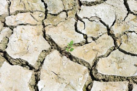 barren: New life on barren ground.