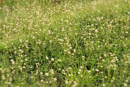 The Blurred edges of grass flower field.