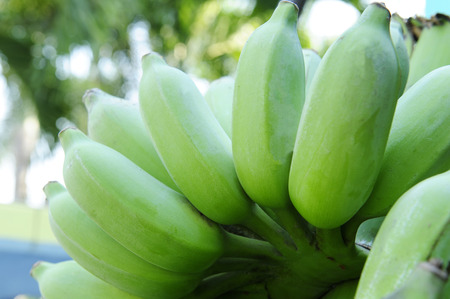 Green cultivated banana Stock Photo