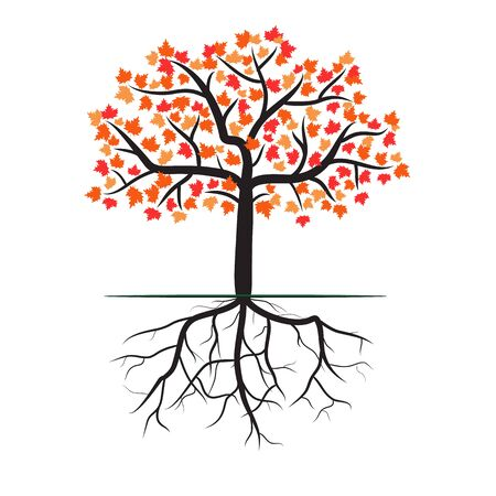 Maple tree with roots on white background Illustration