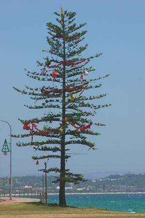 coolangatta: Decorated Christmas tree on a coast, Coolangatta beach, Australia