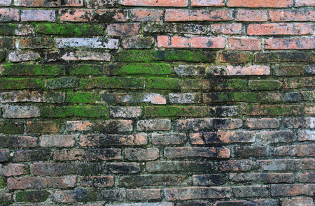 Brick wall with moss growing out of it photo