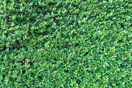 carpet clean: Green leaves wall background