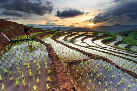 チェンマイ、タイでの田んぼテラス