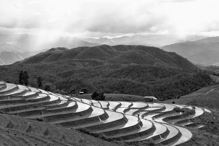 Rice fields on terraced at Chiang Mai, Thailand in black and white photo