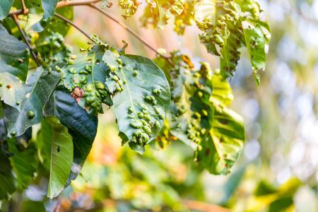 fungal disease: Disease spots on a closeup of a leaf Stock Photo