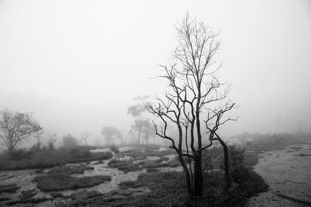 Mist at Khao Kho is the national park of Phetchabun Province, Northern Thailand  photo